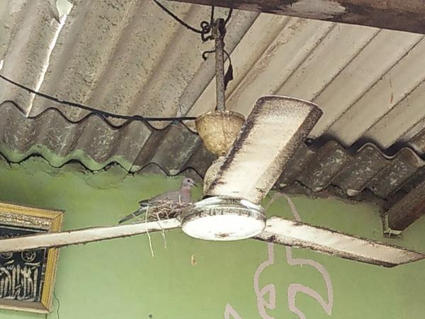 What is the dirtiest ceiling fan you ever found might not be the dirtiest one i have seen yet publicscrutiny Choice Image